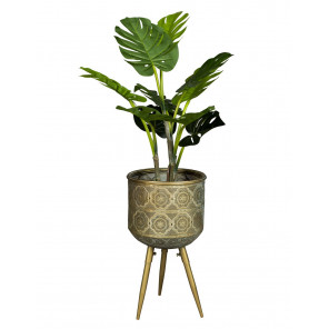 Botanique Stand Plant